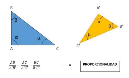 Teorema De Tales Explicado Para Que Lo Entiendas Teorema